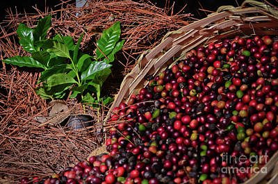 Photograph - Coffee Culture In Sao Paulo - Brazil by Carlos Alkmin