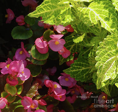 Photograph - Color Combination Flowers Cc62 by Monica C Stovall