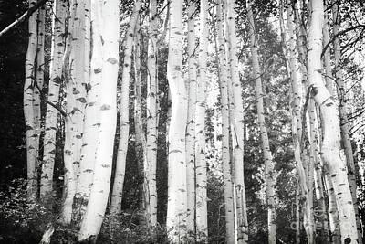 Photograph - Colorado Aspen Trees Classic Forest Landscape by Andrea Hazel Ihlefeld