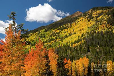 Photograph - Colorado Autumn by Jim West
