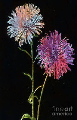 Aster Mixed Media - Colored Garden Asters by T Anderson