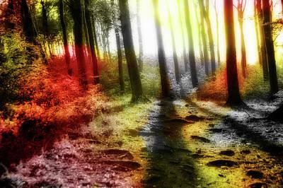 Jonny Jelinek Royalty-Free and Rights-Managed Images - Colorful Forest by Jonny Jelinek