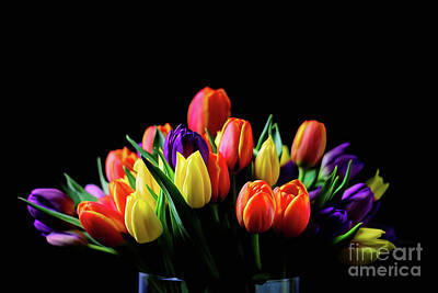 Photograph - Colorful Tulips by Darren Fisher