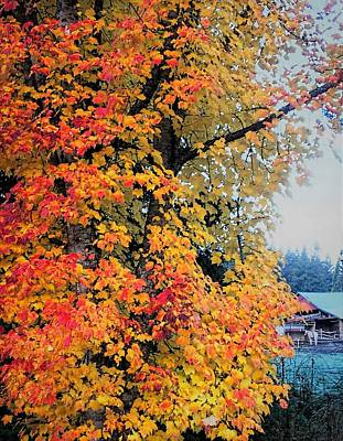 Pyrography - Colors Of Autumn by Sergey and Svetlana Nassyrov