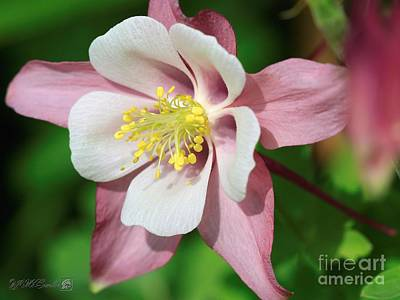 Photograph - Columbine From The Songbird Series Named Robin by J McCombie
