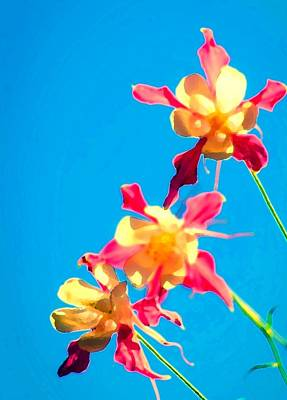 Photograph - Columbines by Sherri Meyer