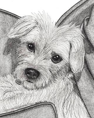 Shihtzu Drawing - Comfy by Marie Wern