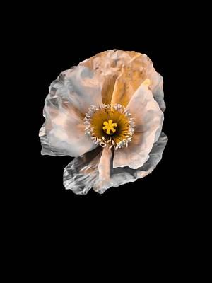 Orange Poppy Photograph - Coming Alive by Heather Joyce Morrill