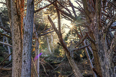Point Lobos State Photograph - Coming Through by Joseph S Giacalone