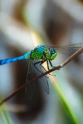 Green Darner Dragonflies Photograph - Common Green Darner by Rich Leighton