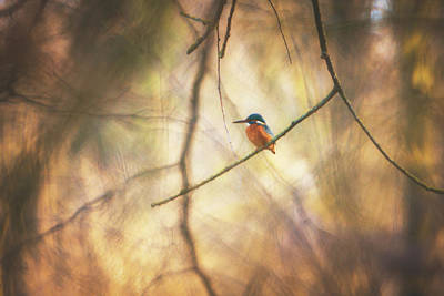All You Need Is Love - Common Kingfisher - Alcedo atthis by Marc Braner