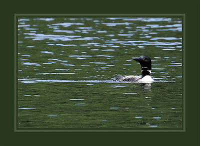 Photograph - Common Loon Triple Matted In Green by Sandra Huston