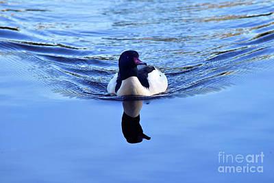 Photograph - Common Merganser  by Terry Elniski