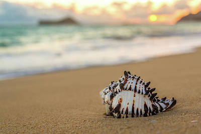Photograph - Conch Shell At Sunrise by Leigh Anne Meeks