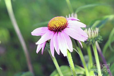 Photograph - Cone Plant by Dan De Ment