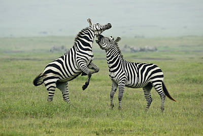 Confrontation In Stripes Art Print by Michele Burgess