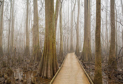 Cypress Swamp Photograph - Congaree National Park by Derek Thornton