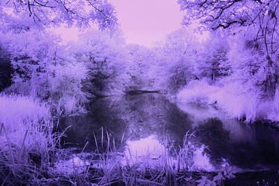 Photograph - Conishead Lake by Keith Elliott