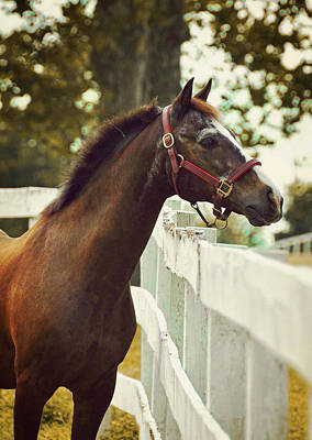 Photograph - Connemara Stud by JAMART Photography
