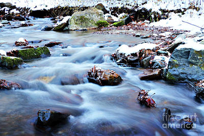 Photograph - Cool Waters by Rebecca Davis