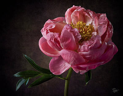 Photograph - Coral Peony by Endre Balogh