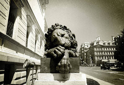 Photograph - Corcoran Lion by Victoria Lakes