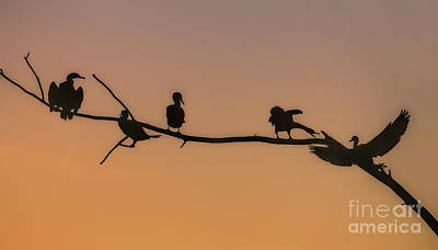 Photograph - Cormorant Wars by Elizabeth Winter