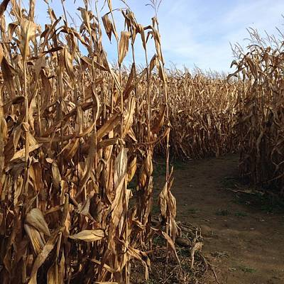 Photograph - Corn Maze by Heidi Moss