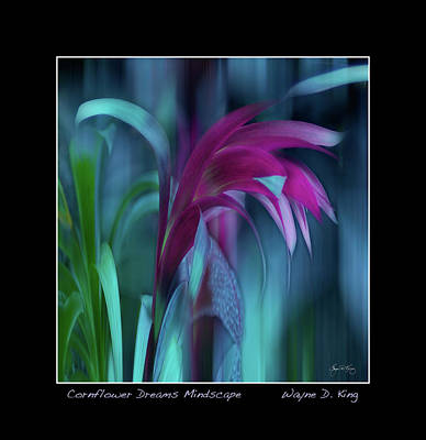 Photograph - Cornflower Dreams No 1 Poster by Wayne King