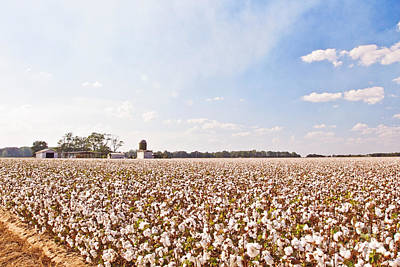 Boll Photograph - Cotton Field by Scott Pellegrin