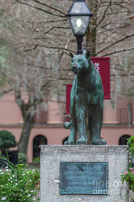 College Of Charleston Photograph - Cougar Town by Dale Powell