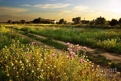 Meadow Wall Art - Photograph - Countryside Landscape by Carlos Caetano
