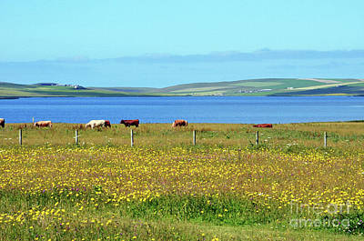 Digital Art - Countryside Of Orkney Scotland by Eva Kaufman