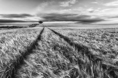 Poland Photograph - Countryside by Piotr Krol (bax)