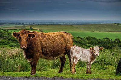 Sottish Photograph - Couple A Coos by Thomas Morrison