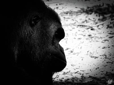Gorilla Photograph - Cousin, No. 43 by Elie Wolf