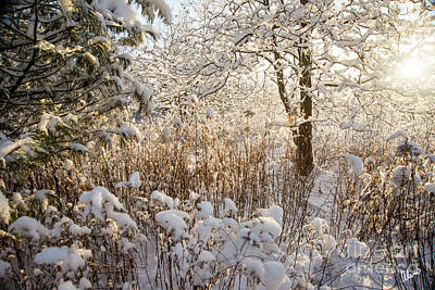 Photograph - Covered In Snow by Alana Ranney