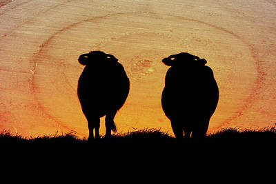 Mixed Media - Cows Against Sunset by Helissa Grundemann