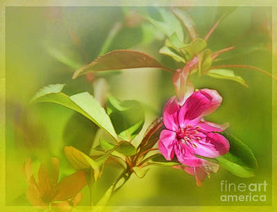 Photograph - Crab Apple by Judi Bagwell
