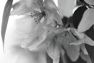 Photograph - Crabapple Blossom Black And White by Donna L Munro