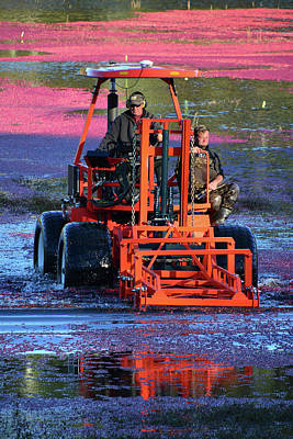 Photograph - Cranberry Harvest by Mike Martin