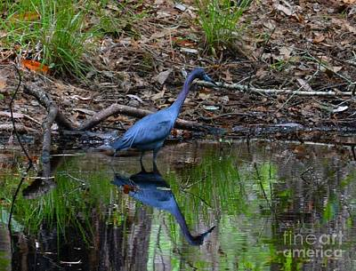 Photograph - Crane by Janice Spivey