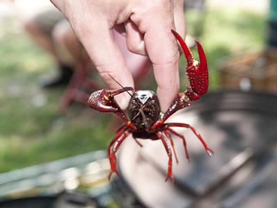 Crawfish Photograph - Crawfish by Jim DeLillo