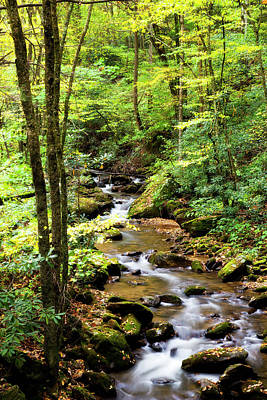 Photograph - Creek In The Woods by Jill Lang