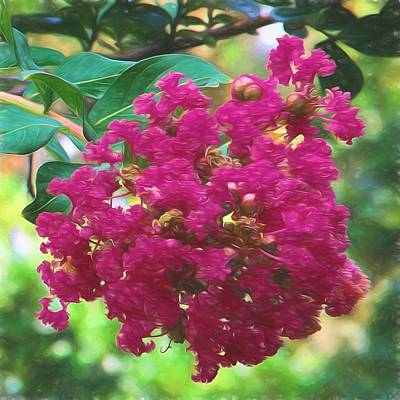 Mixed Media - Crepe Myrtle  by Richard Rizzo