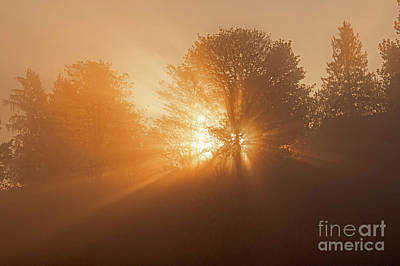 Photograph - Crepuscular Rays Through Trees by Jim Corwin
