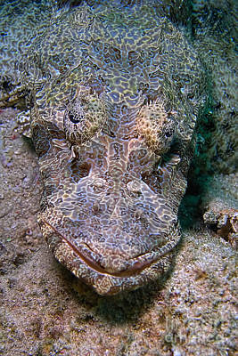 Crocodile Fish Art Print