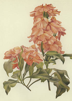 Crossandra Art Print by English School