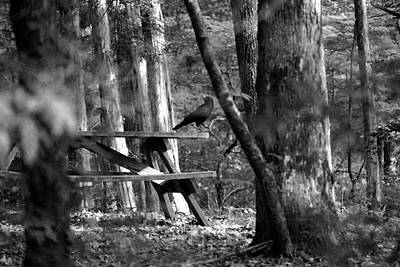 Photograph - Crow On A Table by Andy Lawless
