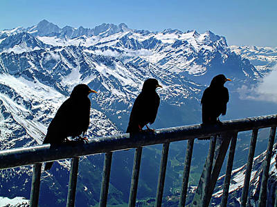 Photograph - Crows On Top Of Mount Titlis - Switzerland by Joseph Hendrix